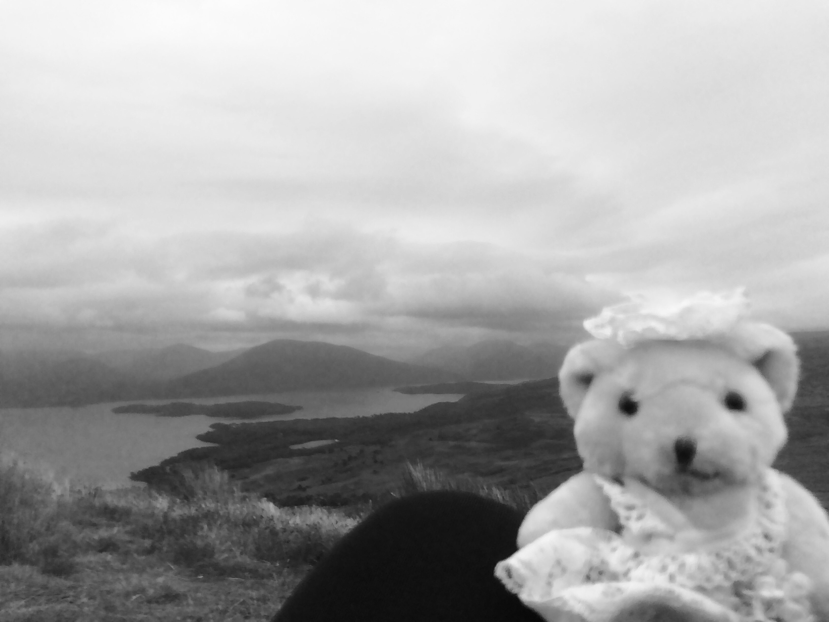 Travel Bear Black and White Photography
