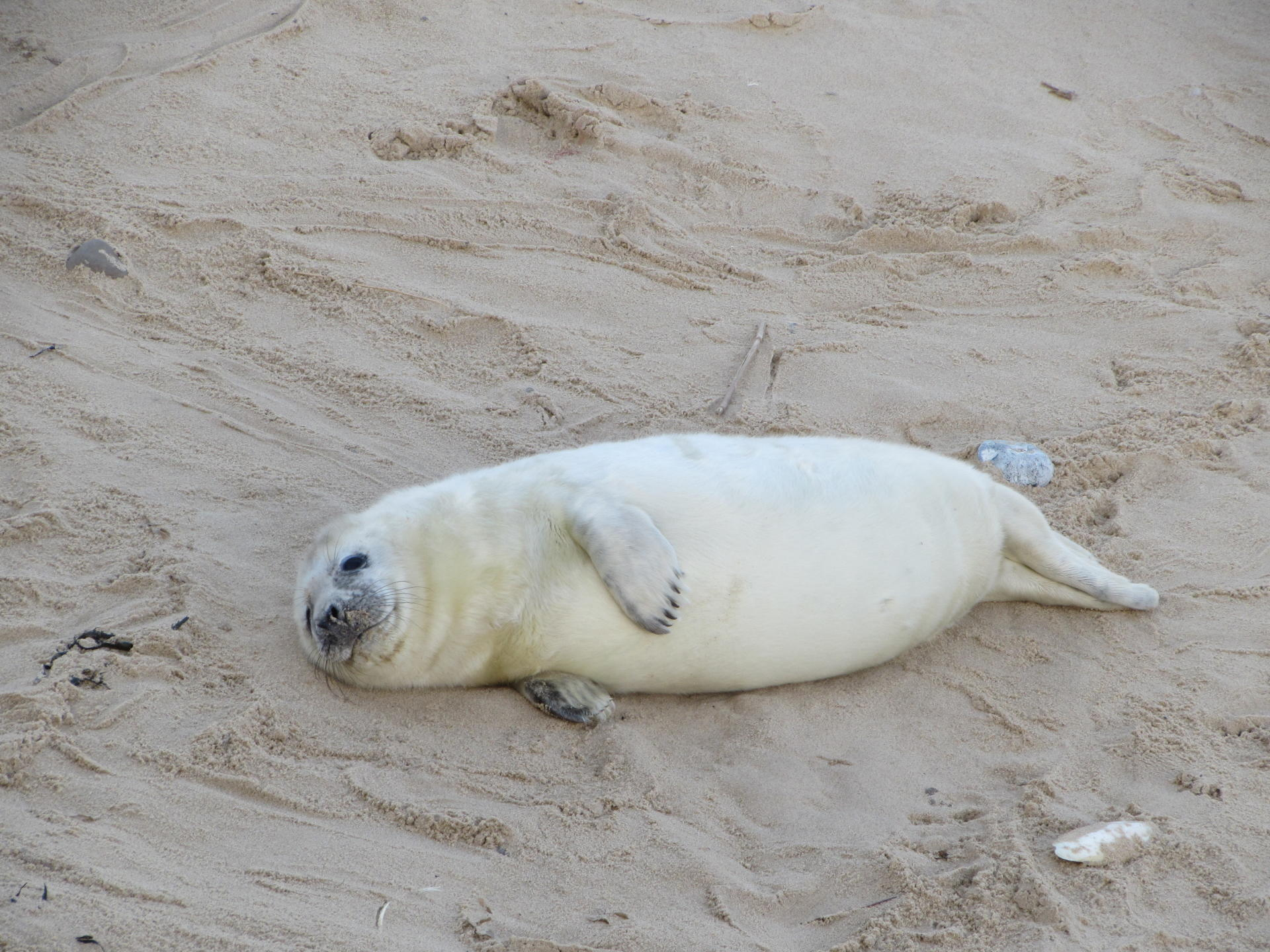 Seal Watching in North Norfolk - Yesihaveablog | Seals Norfolk Horsey Gap | Seal Colony | Norfolk - Life in a Fine City | Winterlust