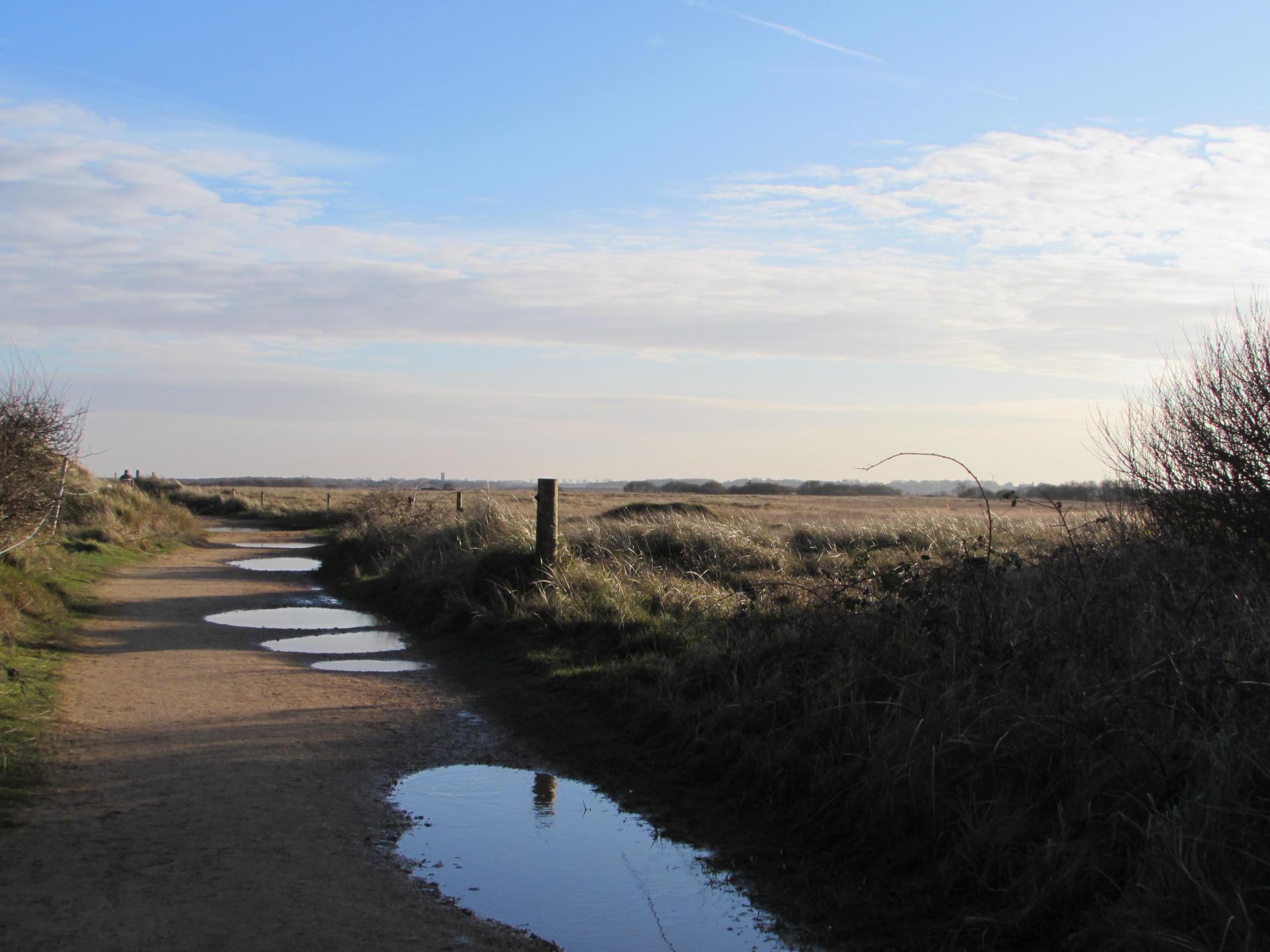 Seal Watching in North Norfolk - Yesihaveablog   Horsey Gap   Norfolk - Life in a Fine City   Winterlust