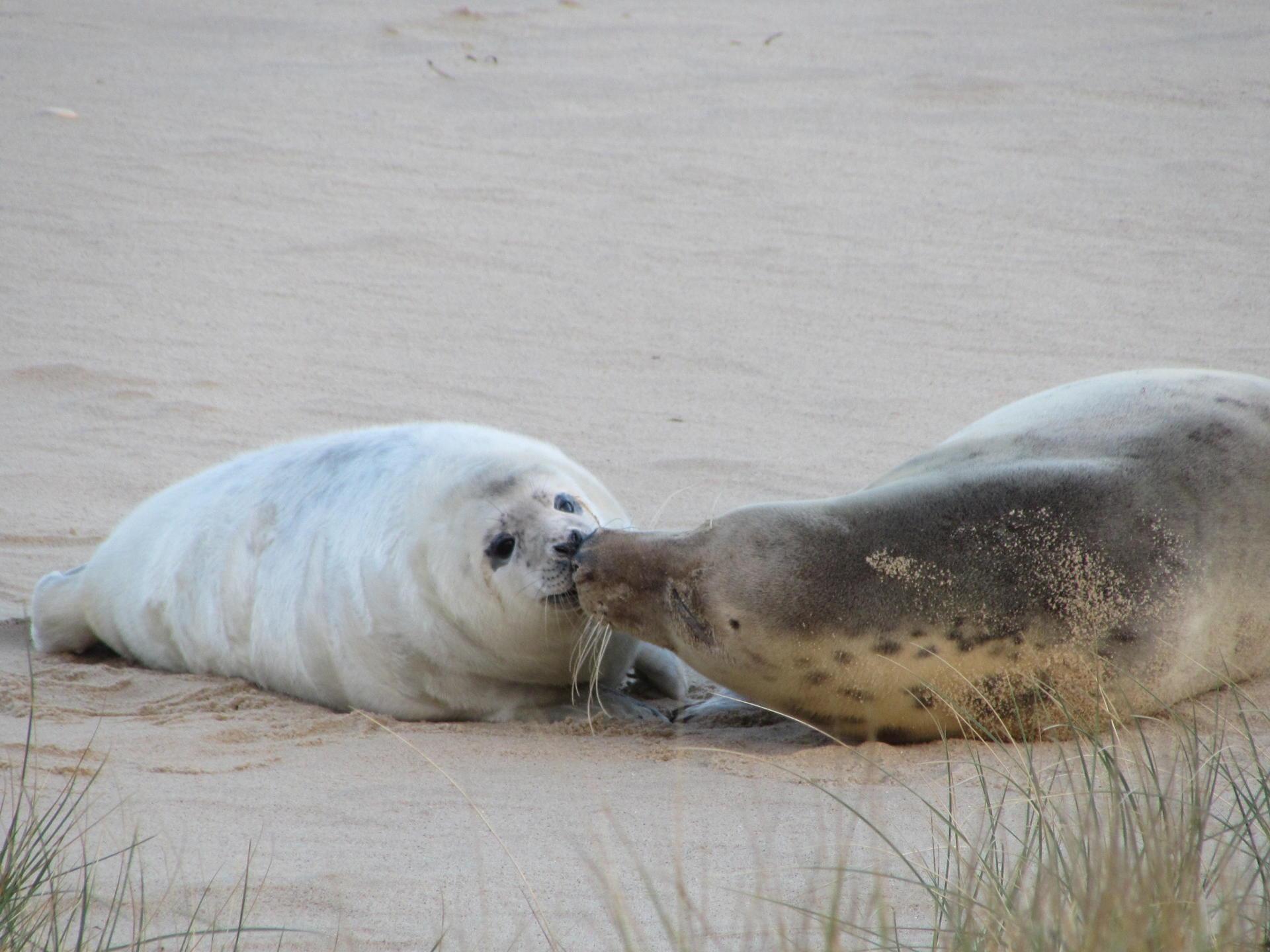 Seal Watching in North Norfolk - Yesihaveablog   Seals of Horsey Gap   Norfolk - Life in a Fine City   Winterlust