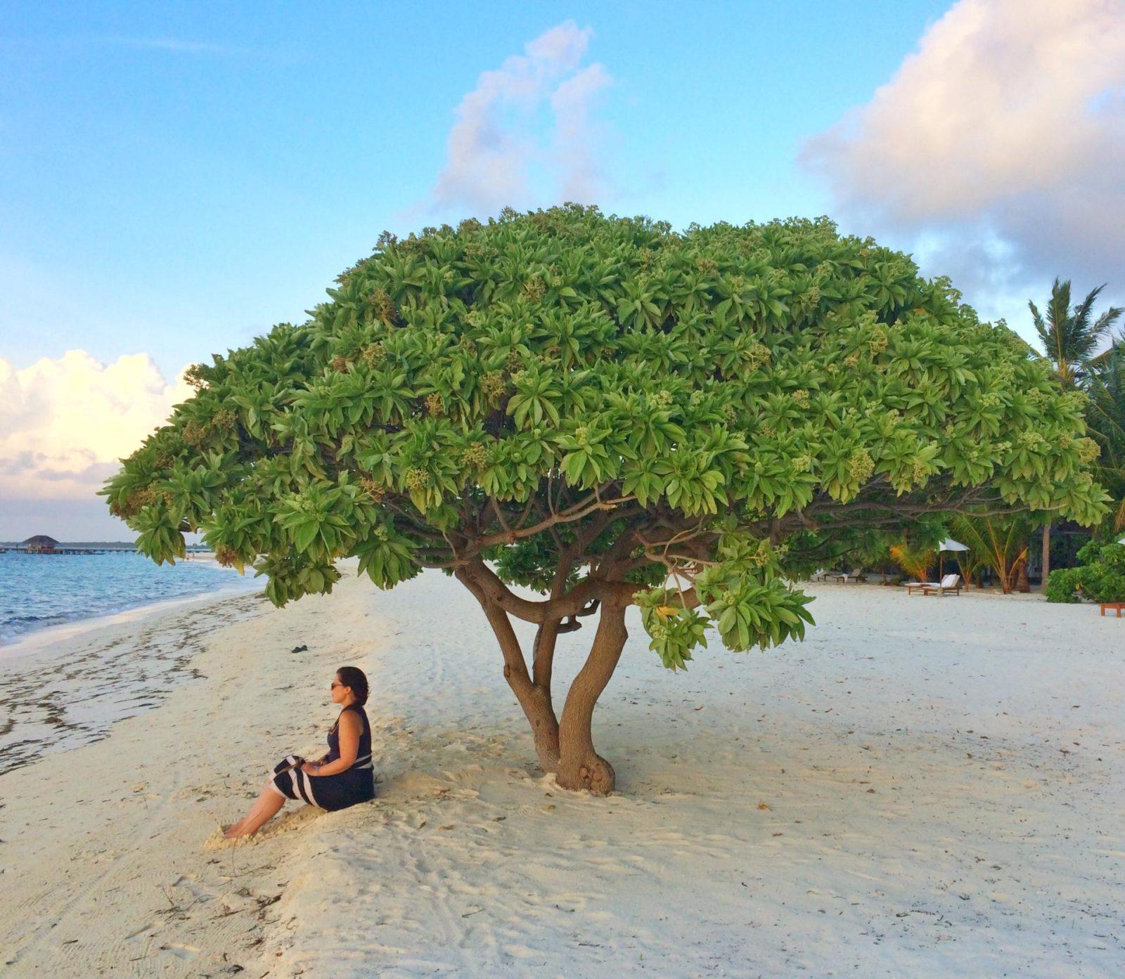 Luxury travel resort spa maldives lux ocean beach paradise