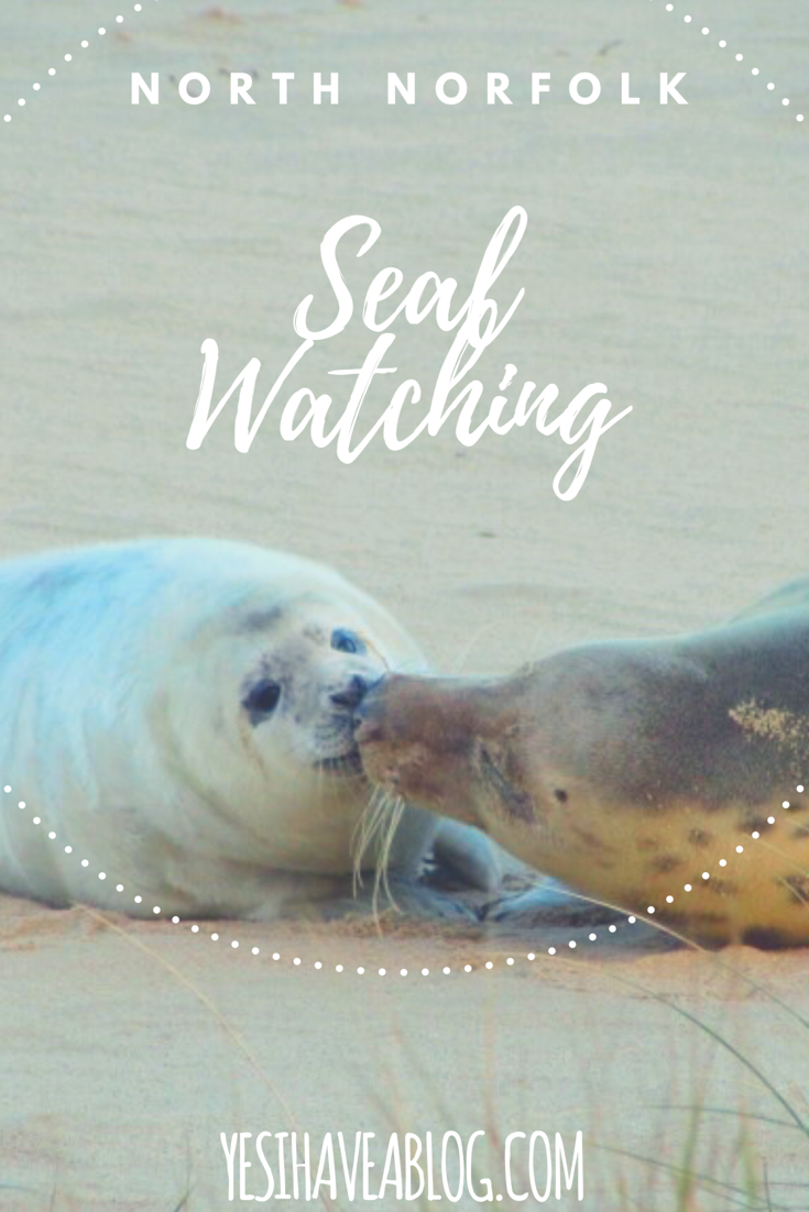 Seal Watching in North Norfolk - Yesihaveablog | Seal Colony Horsey | Wildlife & Nature Photography | Norfolk - Life in a Fine City | Winterlust