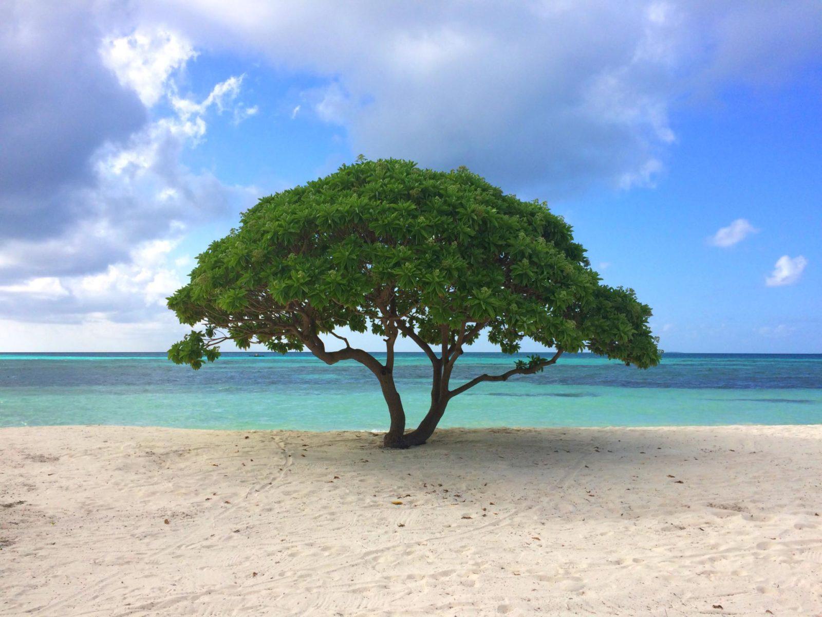 The Maldives Lux resort visit the maldives