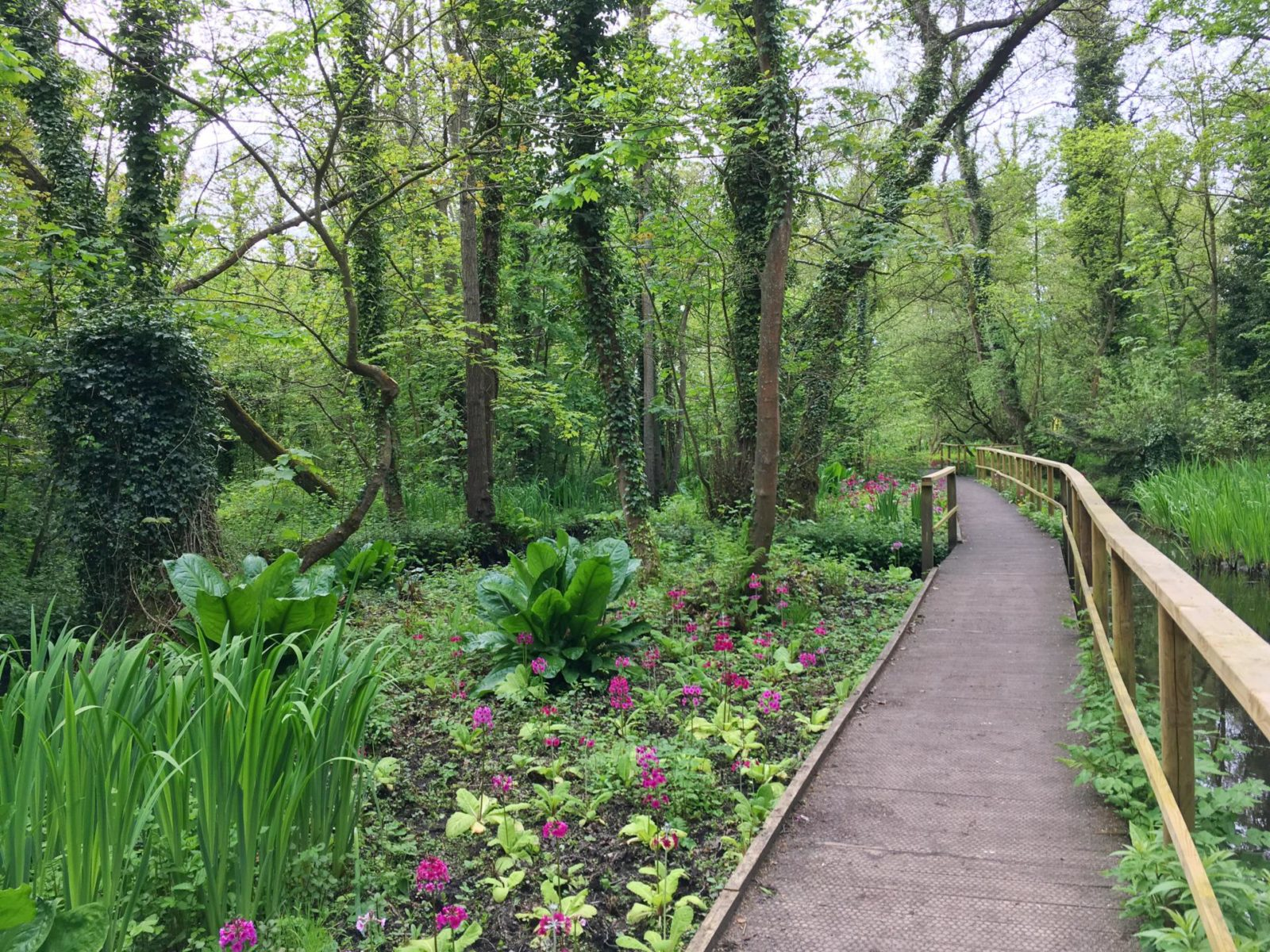 fairhaven water woodland garden nature reserves broads south walsham norfolk