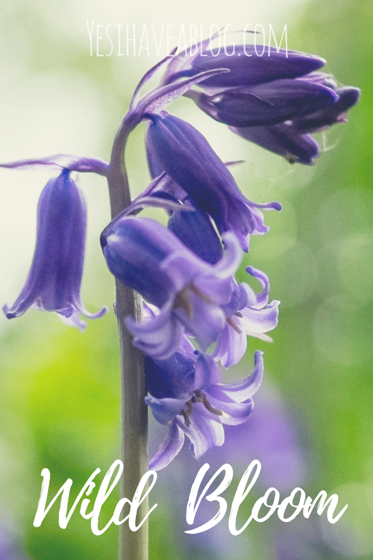 Wild Bloom - Yesihaveablog | A journey along a woodland path to seek out the wild flowers of Norfolk, England | Wild Bluebell Flowers in Britain | Wild Woodland Walks