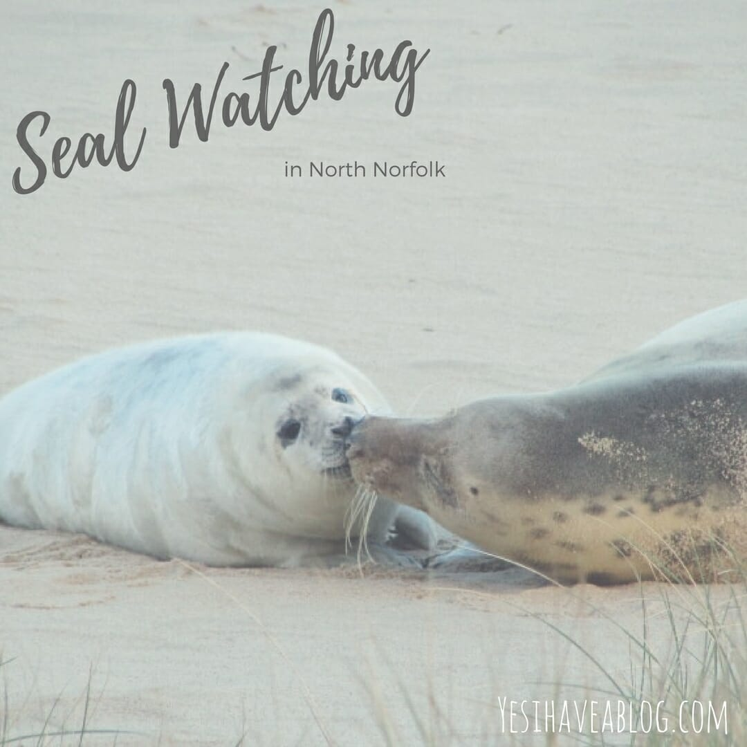 Seal Watching in North Norfolk