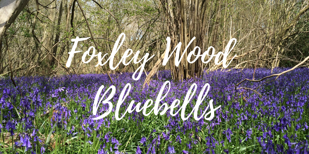 Foxley Wood Bluebells